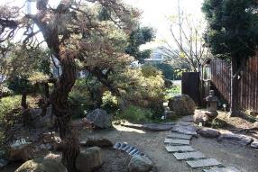 中庭には樹齢200年以上という松の木があります。