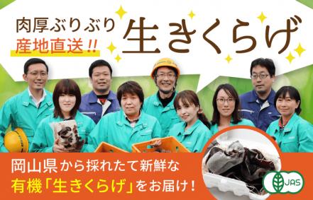 肉厚ぶりぶり産地直送!岡山県からとれたて新鮮な有機生きくらげをお届け